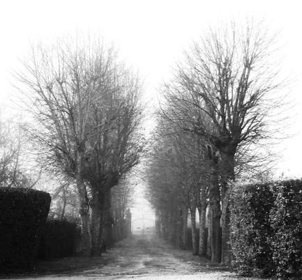 Royal Alley