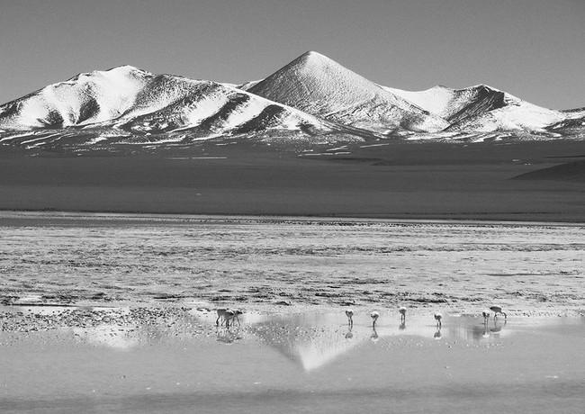 Nido de Flamingos. Cerro Galàn