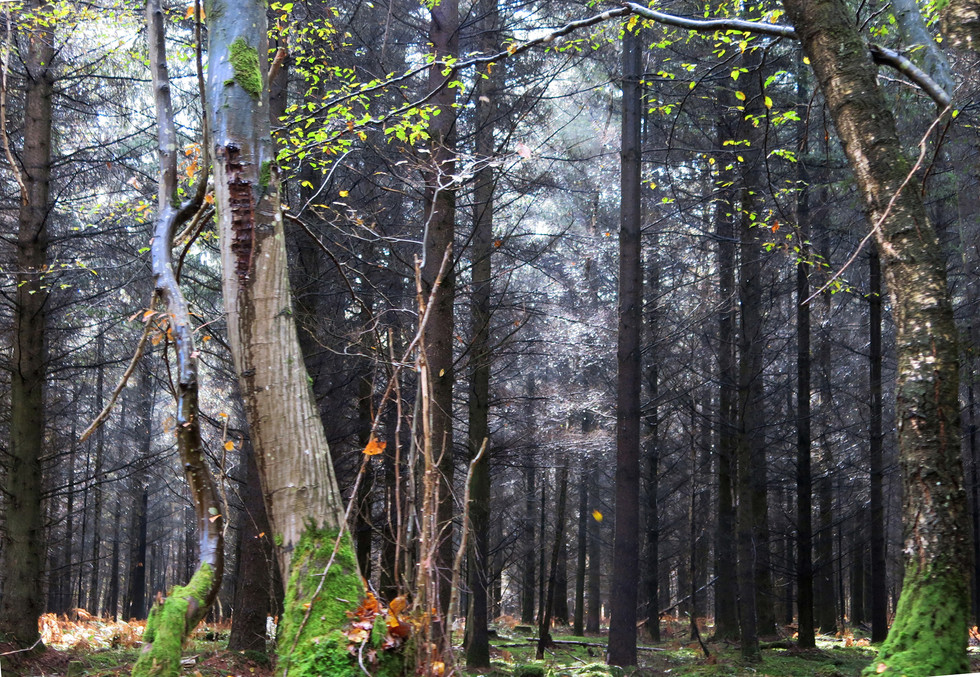 Forest in Cloyes. France