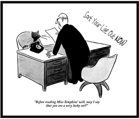 Will Cat.jpg
