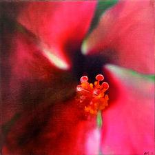 Ibiscus 4.JPG