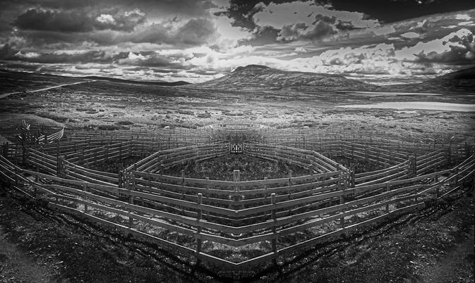 CAV18 - sheepclose