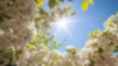 Spring-Image.jpg