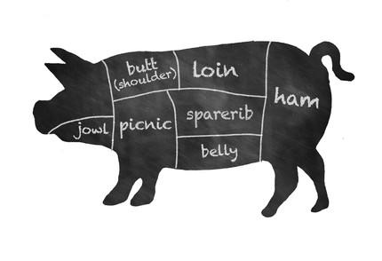 Pig CSA, editorial illustration