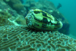 shell on coral