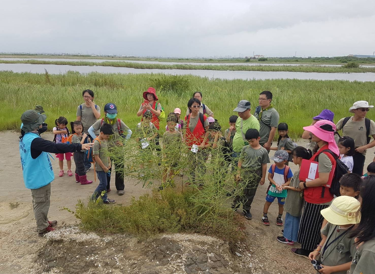 走入濕地認識濱海植物