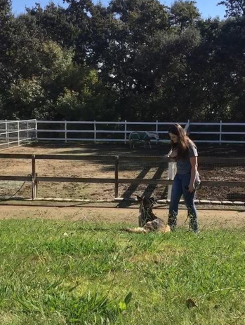 gretchen and horse.jpg