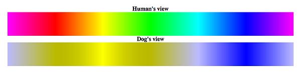 Dog_Vision_Spectrum_1.png