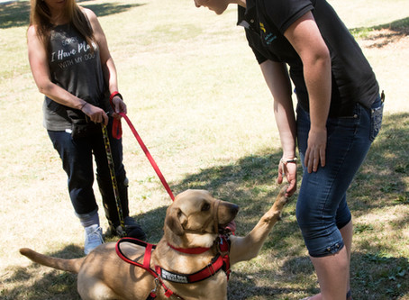 Common Myths In Dog Training