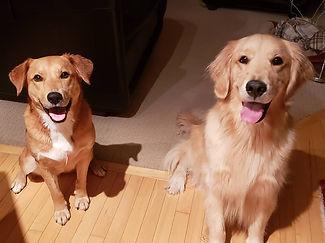 Gracie and Cooper.jpg