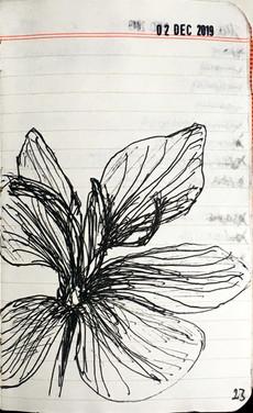 Saffron Sketch 021219.jpg