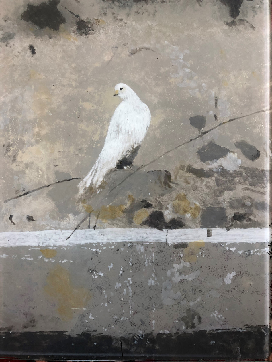The Painted Dove.jpg