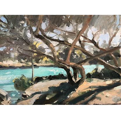 Mediterranean trees, Dominic Parczuk, Artist, Painter, Lincolnshire