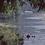 Thumbnail: River