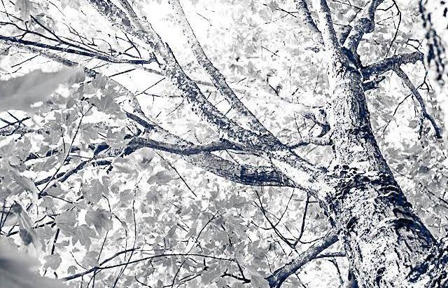 Chapitre 49 -  L'arbre nu …