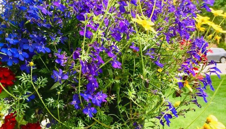 Chapitre 42- Les lilas...