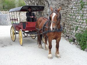 cheval,balade,calèche,stanattelage,mayenne,débourage,animation,tourisme