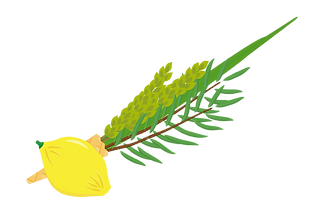 jewish-holiday-of-sukkot-four-species-ve