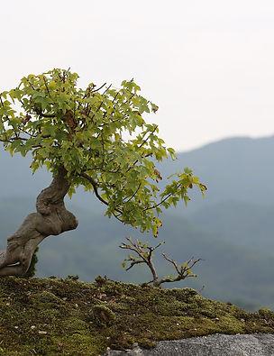 bonsai-2910210_1920.jpg