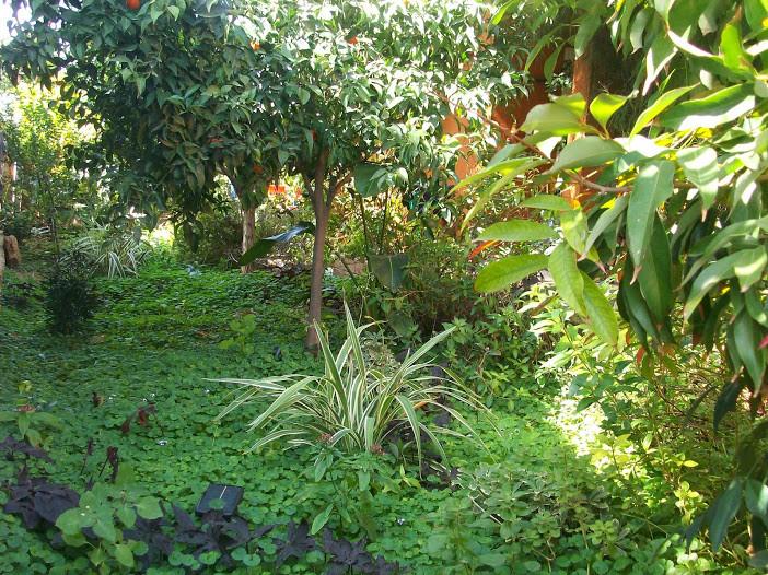 יער טרופי קטן ליד הבית