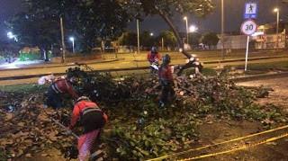 Boletin Notired 26Abr21 - Denuncian nuevas talas de árboles en la avenida 68