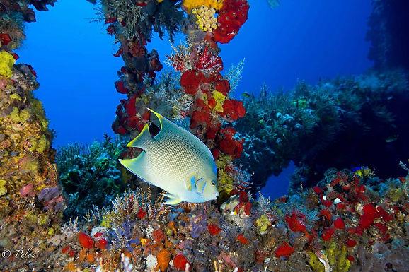 South Padre Drive & Dive