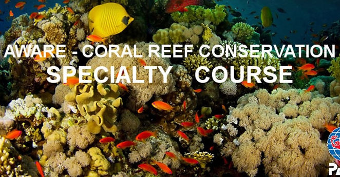 coral reef conservation_edited.jpg