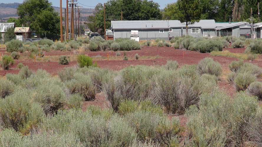 Tule-Lake-Pilgrimage-2014-110