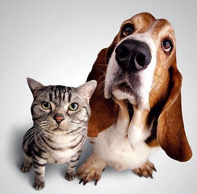 chien-chat-cohabitation.jpg