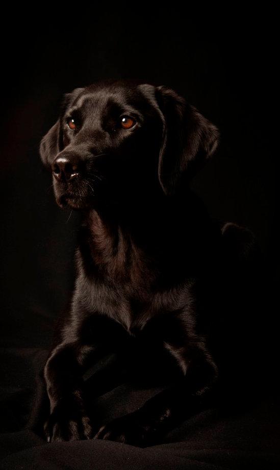 portrait-studio-chien-isole-fond-noir_19