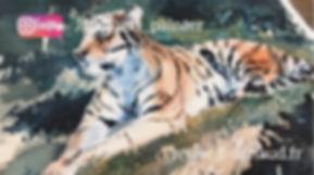 Tigre cours de Jean-François Arnaud