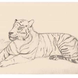 Dessin Tigre - Anne G.