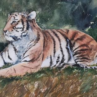 Le tigre de Jacqueline M.