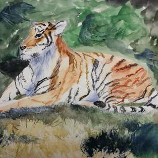 La tigresse de Micheline C.