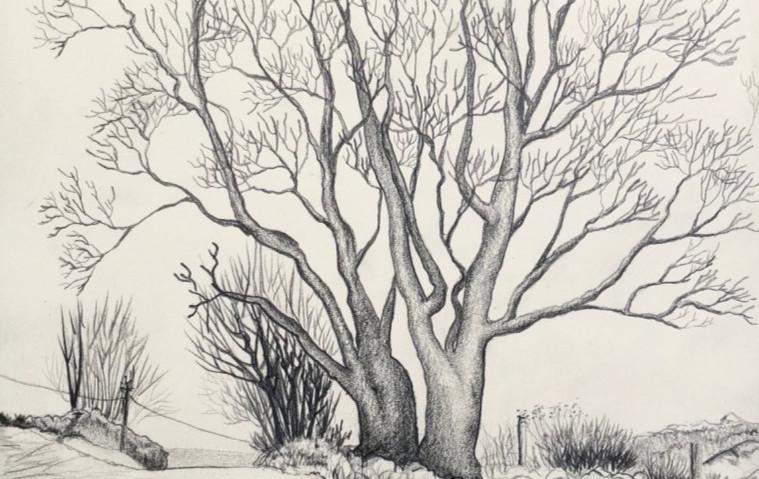 """""""Auprès de mon arbre"""" - Croquenligne 5"""