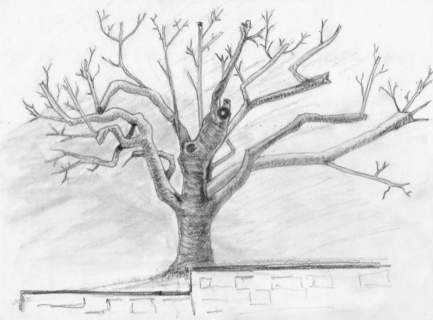 """""""Auprès de mon arbre..."""""""