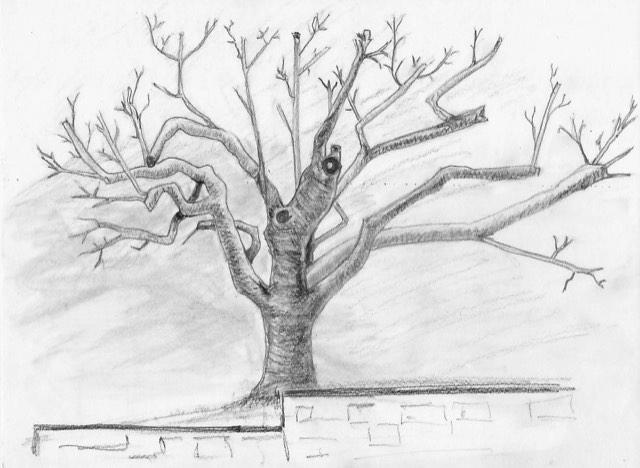 """""""Auprès de mon arbre..."""" - Croquenligne 5"""