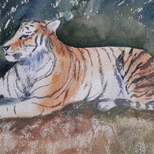 Le tigre d'Odile C.