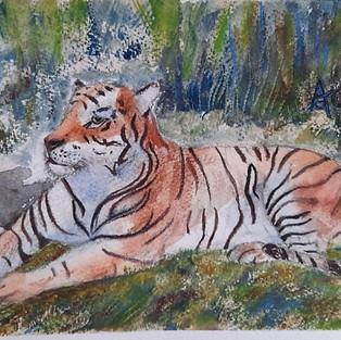 Le tigre d'Anne G.
