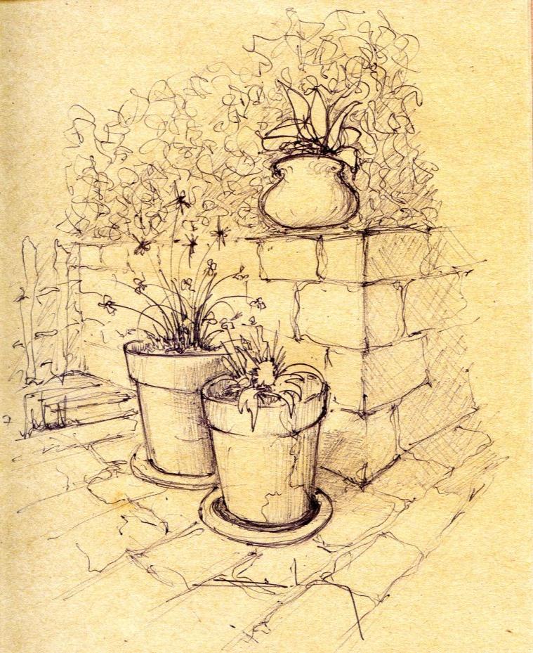 """""""plantes en pot"""""""