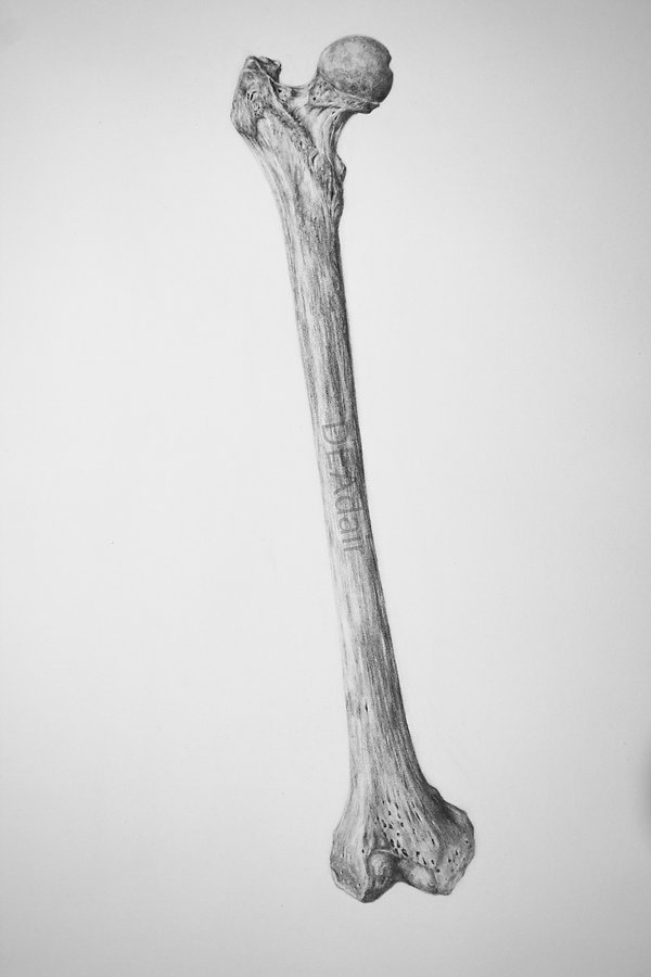 Femur-Watermarked.jpg