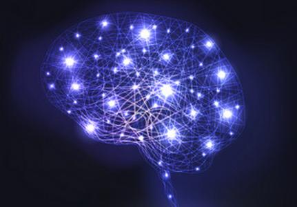 cerveau jpg.png
