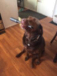 Dog home page.jpg