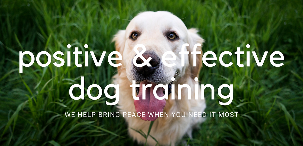 Dog Training at its Best (2).png