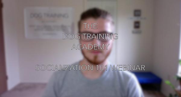 Dog Socialization Webinar with The Dog Training Academy