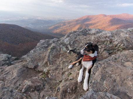 Top 10 Tips to Traveling with your Dog