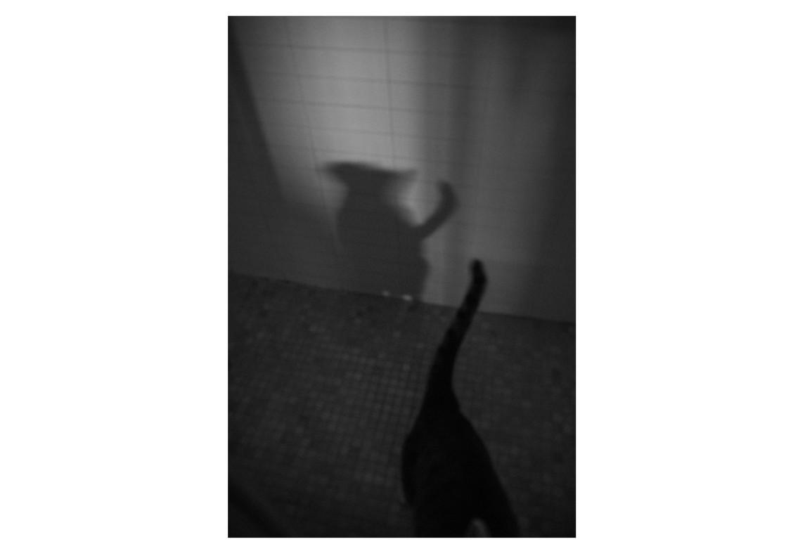 Tail. New York, 2020