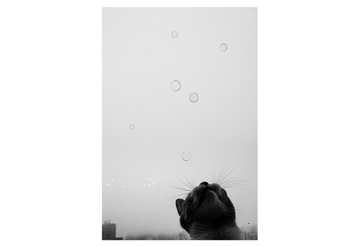 Bubbles, New York, 2020