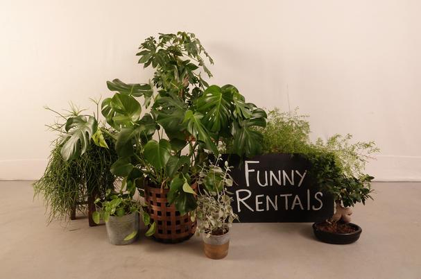 diverse echte planten