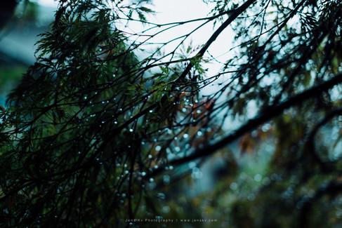 Kyoto in Rain (Travel, Wedding, Photographer, Malaysia, Singapore, Japan) - 30.jpg